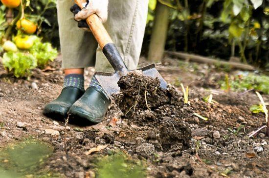 多土埋金 採掘 掘り起こす