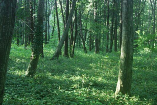 木の五行の画像